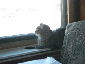 Whisper Looking Out The Window At New Scenery