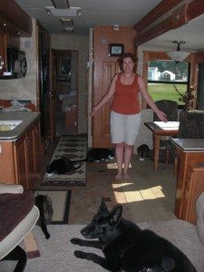 Dinner Time With 4 Kitties and Tasha Waiting Patiently.