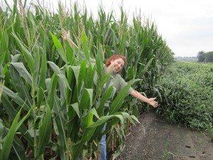 Brenda Inside The Corn Field In Amana, Iowa
