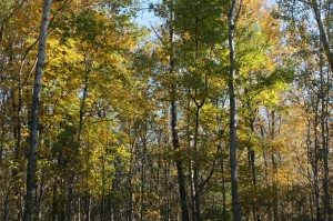 Fall Foliage On Our Property In Upstate NY