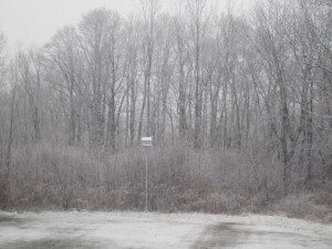 Our Backyard This Morning, Dec. 1, 2010
