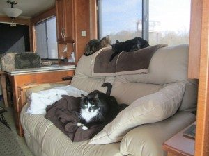 Tory & Angel On Top Of Couch And BK On Seat
