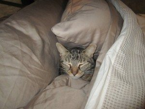 Tory's New Sleeping Spot, Between Our Pillows Under The Covers.