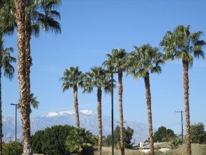 California Palm Trees And California Mountains In The Distance