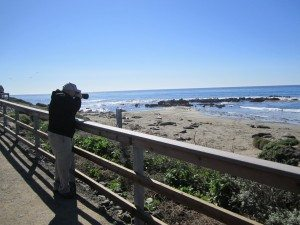 David Photographing The Elephant Seals