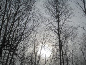 The Sun Trying To Brighten The Sky On This Foggy Morning