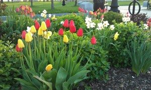 Spring Flowers In Bloom At Ontario Beach Park