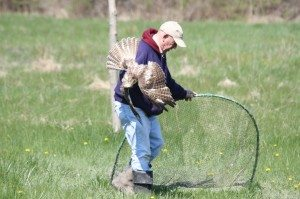 Volunteer Getting The Hawk Out Of The Net So He Can Band It.