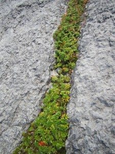 Plant Life Growing Out Of The Rocks