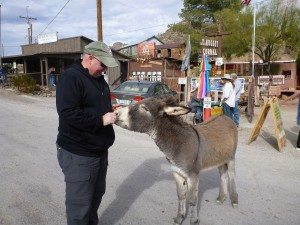 David Feeding A Donkey In Oatman, AZ