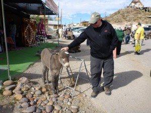 David With A Baby Burro In Oatman, AZ