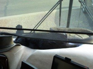 BK Passed Out On The Dash In The Sun