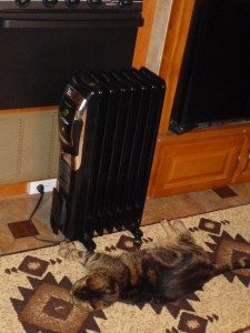 Tory Sleeping In Front Of The Heater