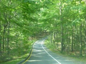 Part Of The Pierce Stocking Scenic Drive