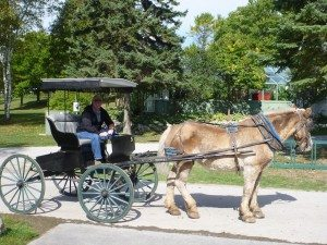 """David """"Driving"""" Our Horse And Buggy Around The Island."""