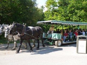 One Of The Many Horse And Buggy Tours Around The Island