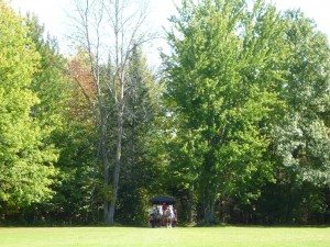 The Carriage Emerging From The Woods Onto The Golf Course