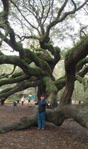 David And The Angel Tree