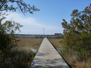 The Walkway Over The Marsh Land Leading To The Fishing Pier