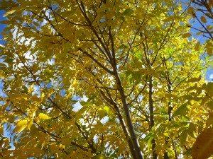 Fall Colors Pop In Santa Fe