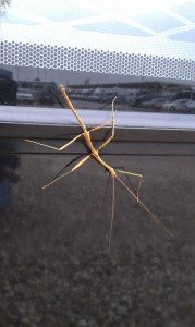 A Stick Bug On Our Motorhome