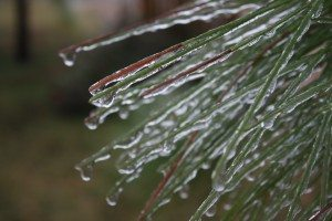 Ice Drips Frozen On The Branches