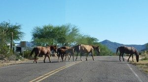 Wild Horses By The Park