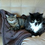 Traveling With Cats in a Motorhome
