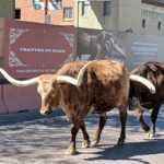An Afternoon At The Fort Worth Stockyards